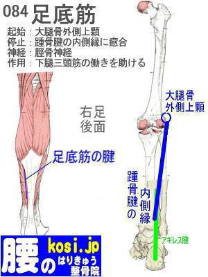 足底筋、ぎっくり腰【腰痛専門】腰のはりきゅう整骨院、福岡太宰府