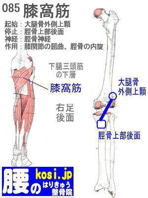 膝窩筋、福岡太宰府、ぎっくり腰【腰痛専門】腰のはりきゅう整骨院