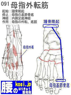 母指外転筋、福岡太宰府、ぎっくり腰【腰痛専門】腰のはりきゅう整骨院