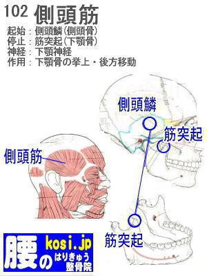 側頭筋、ぎっくり腰【腰痛専門】腰のはりきゅう整骨院、福岡太宰府、