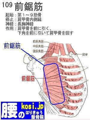 前鋸筋、福岡 太宰府、ぎっくり腰【腰痛専門】こしの鍼灸整骨院