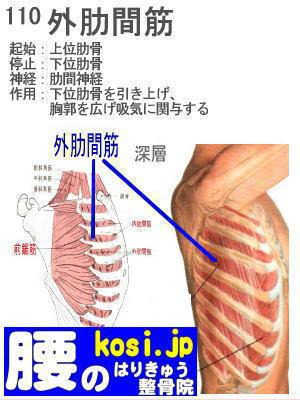 外肋間筋、福岡太宰府、ぎっくり腰【腰痛専門】腰のはりきゅう整骨院