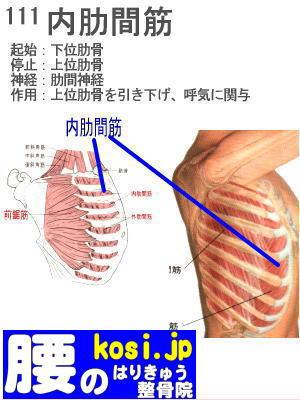 内肋間筋、ぎっくり腰【腰痛専門】腰のはりきゅう整骨院、福岡太宰府
