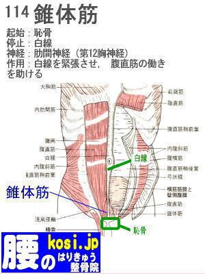 錐体筋、ぎっくり腰【腰痛専門】腰のはりきゅう整骨院、福岡太宰府