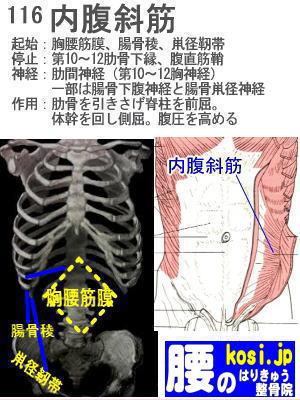 内腹斜筋、ぎっくり腰【腰痛専門】腰のはりきゅう整骨院、福岡太宰府