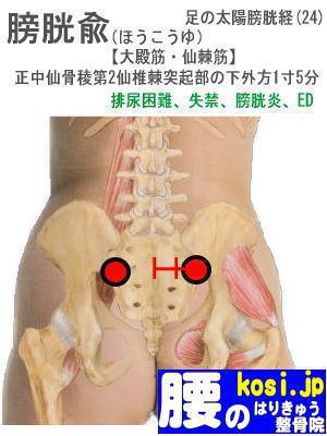 膀胱兪、福岡 太宰府 こしの鍼灸整骨院