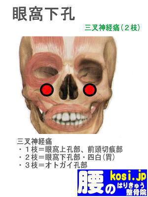 眼窩下孔、福岡 太宰府 こしの鍼灸整骨院