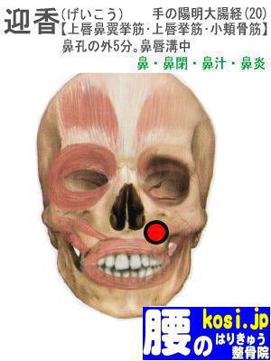 迎香、福岡 太宰府 こしの鍼灸整骨院