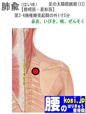 肺兪、福岡 太宰府 こしの鍼灸整骨院