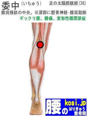 委中、ぎっくり腰【腰痛専門】腰のはりきゅう整骨院、福岡太宰府
