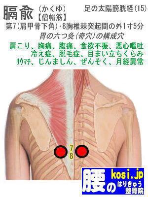膈兪、ぎっくり腰【腰痛専門】腰のはりきゅう整骨院、福岡太宰府
