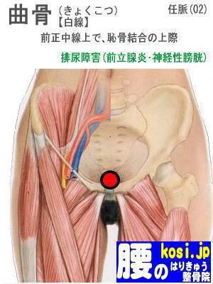 曲骨、福岡 太宰府 こしの鍼灸整骨院