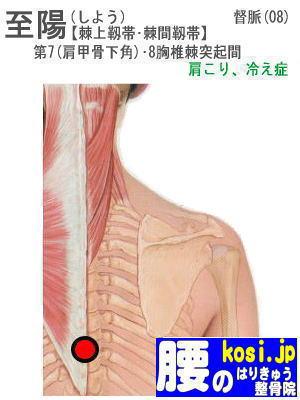 至陽、ぎっくり腰【腰痛専門】腰のはりきゅう整骨院、福岡太宰府